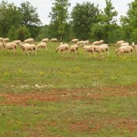 Pelouses sèches et brebis © PNRCQ