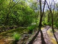 Marais de Bonnefont - Balade au bord du ruisseau_09 © Lot Tourisme - C. Sanchez