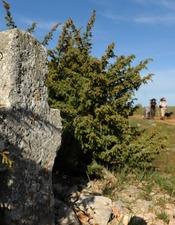 Section de sentier Faycelles -Cajarc