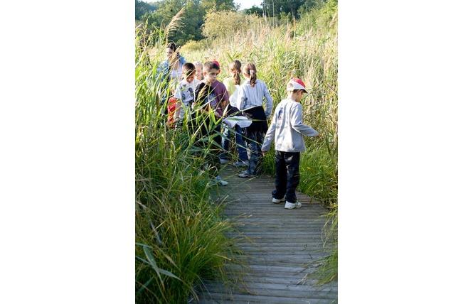 Réserve Naturelle Régionale du Marais de Bonnefont 9 - Mayrinhac-Lentour