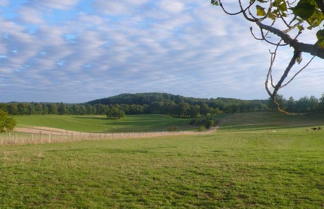 Alpagas du Quercy 10 - Frayssinet