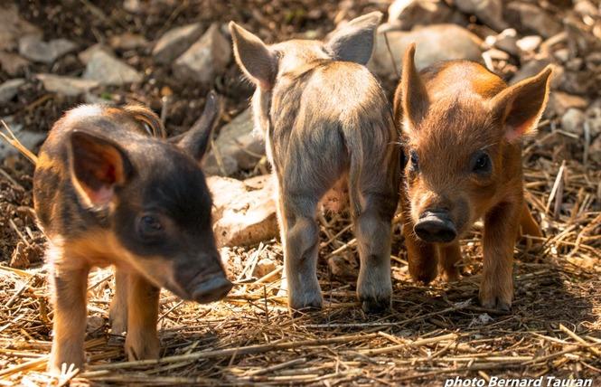 Parc Animalier de Gramat 9 - Gramat