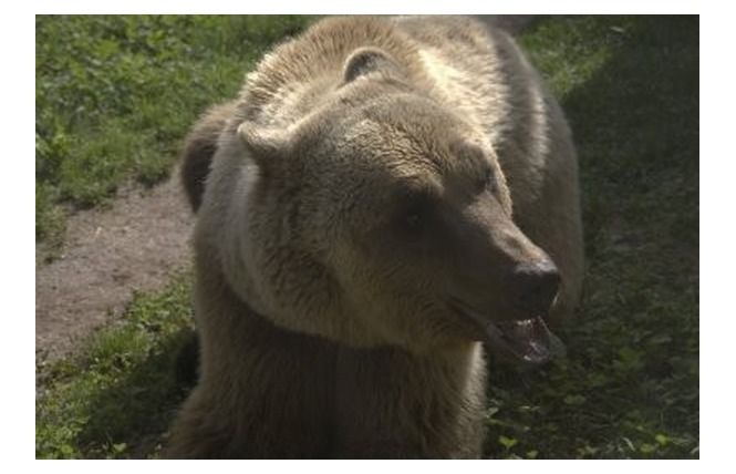 Parc Animalier de Gramat 22 - Gramat