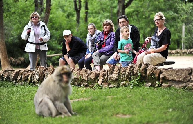 La Forêt des Singes 10 - Rocamadour