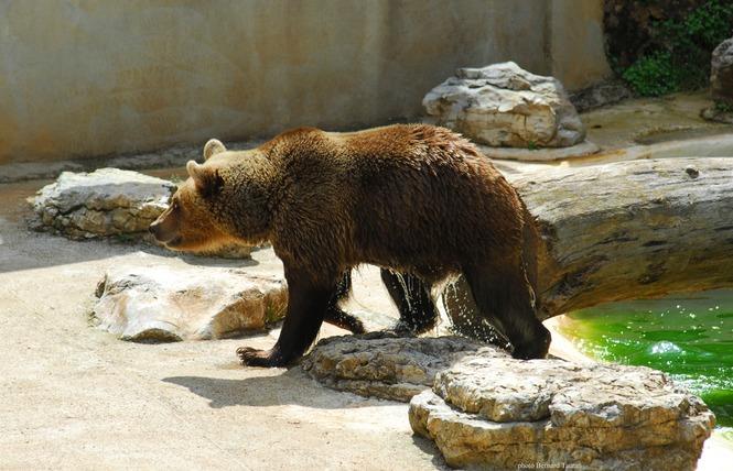 Parc Animalier de Gramat 4 - Gramat