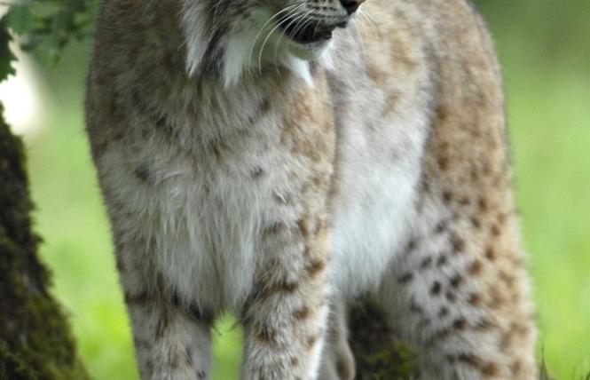 Parc Animalier de Gramat 14 - Gramat
