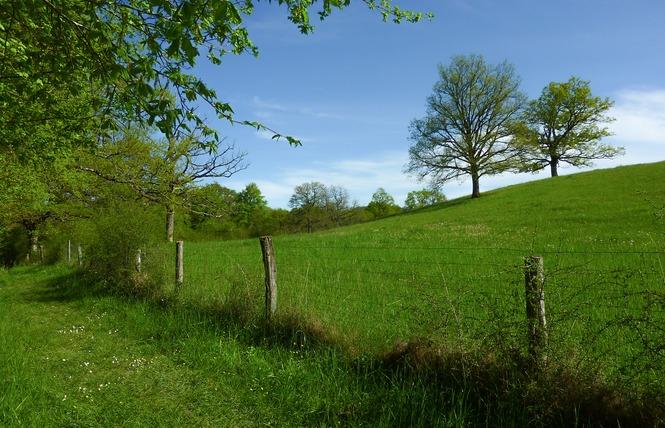 Le Marais de Bonnefont, Réserve Naturelle Régionale 4 - Mayrinhac-Lentour
