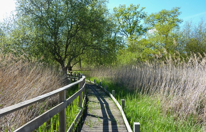 Le Marais de Bonnefont, Réserve Naturelle Régionale 1 - Mayrinhac-Lentour