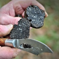 La truffe noire © OT Vallée de la Dordogne