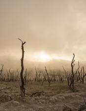 23-mai-dead-trees-pixabay