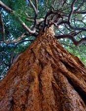 arbre-2