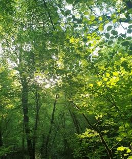 Sous la Canopée / Balade Forestière