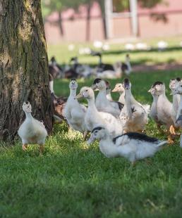Goûtez les Causses du Quercy ! / Visite d'une ferme