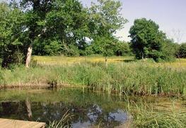Réserve Naturelle Régionale du Marais de Bonnefont - Mayrinhac-Lentour