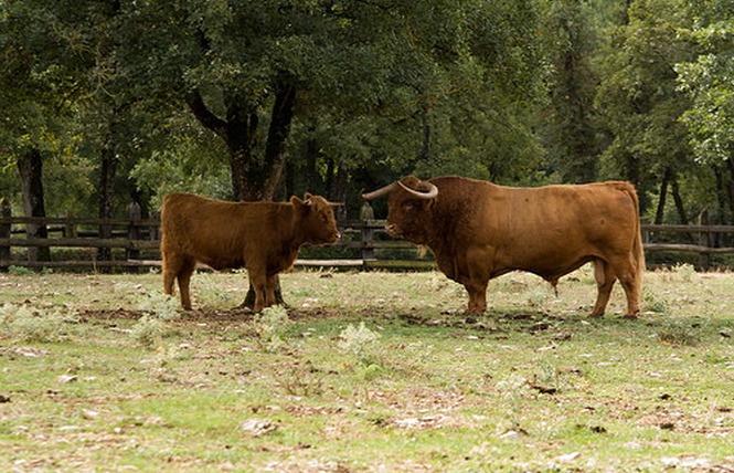 Parc Animalier de Gramat 23 - Gramat
