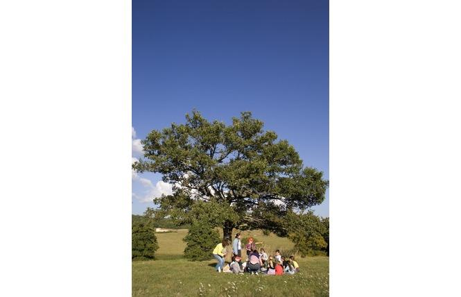 Réserve Naturelle Régionale du Marais de Bonnefont 16 - Mayrinhac-Lentour
