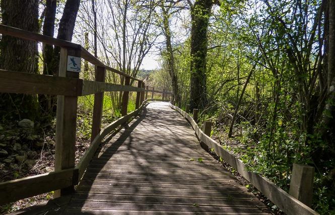 Le Marais de Bonnefont, Réserve Naturelle Régionale 14 - Mayrinhac-Lentour